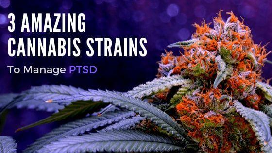 Manage PTSD