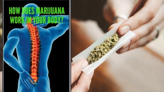 Marijuana Work
