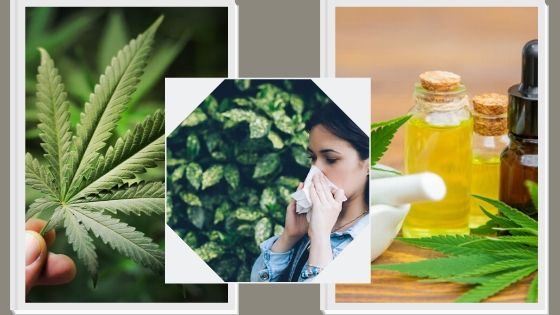 How Does Cannabis Affect Our Immune System