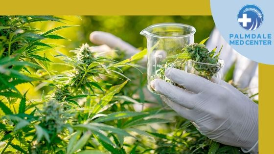 The Most Common Medical Cannabis Myths That You Must Avoid
