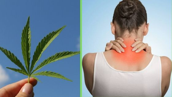 Marijuana Help Manage Fibromyalgia Symptoms