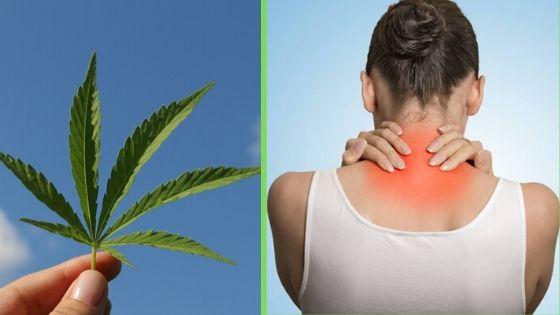 Marijuana Help Manage Fibromyalgia Symptoms