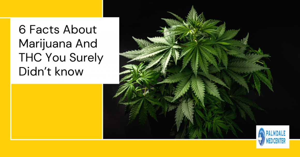 6 Facts About Marijuana and THC You Surely Didn't know