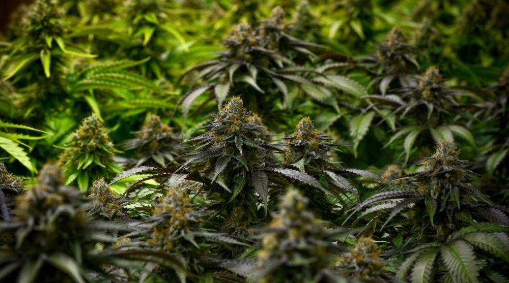 medical marijuana card online Palmdale